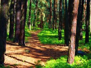 V lese u Hrádkova