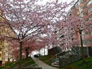 Jaro vBlansku na sídlišti