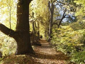 Podzim valeji zámeckého rybníka