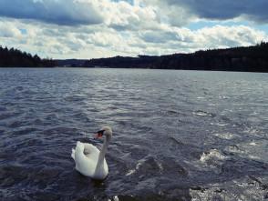 Jedovnice – rybník Olšovec