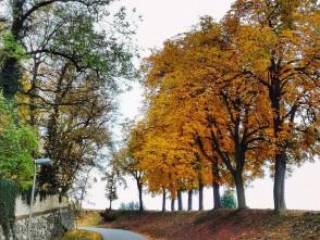 Podzim vzámeckém parku – Rájec – Jestřebí