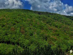 Pohled na Adamovské údolí směrem kželez. zastávce