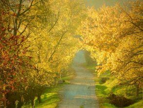 Loňský podzim vKunštátě